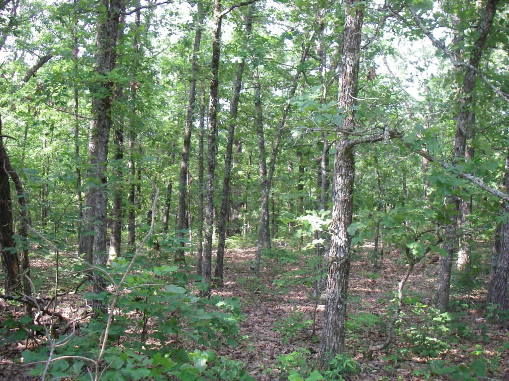 46 Acres m/l Hunting Land w/Cabin