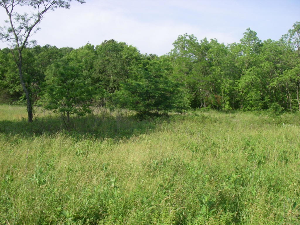 20 Acres Of Bottom Land W/Excellent Hunting