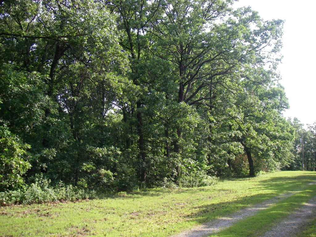 Fantastic Building Site on 8.7 Acres In SW Mo.