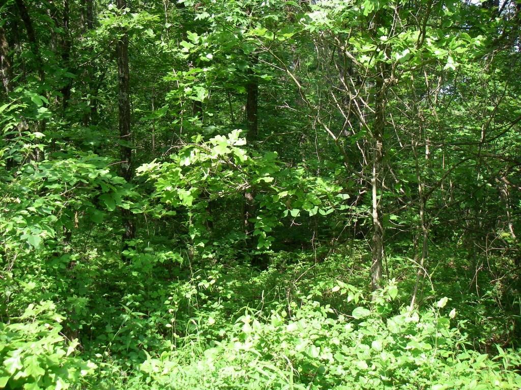 90 Lots in Timber Lake Subdivision in Osceola, Mo.