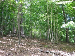 BUILDING LOT NEAR CLAYTOR LAKE FOR SALE