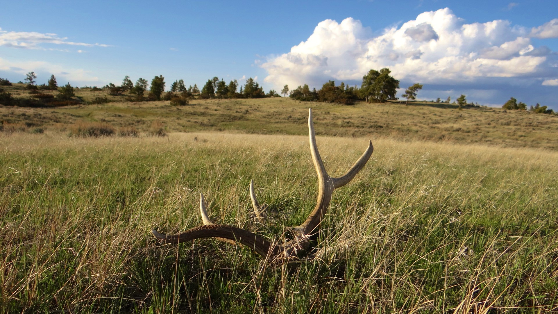 Missouri Breaks Grazing & Hunting Property Land Auction