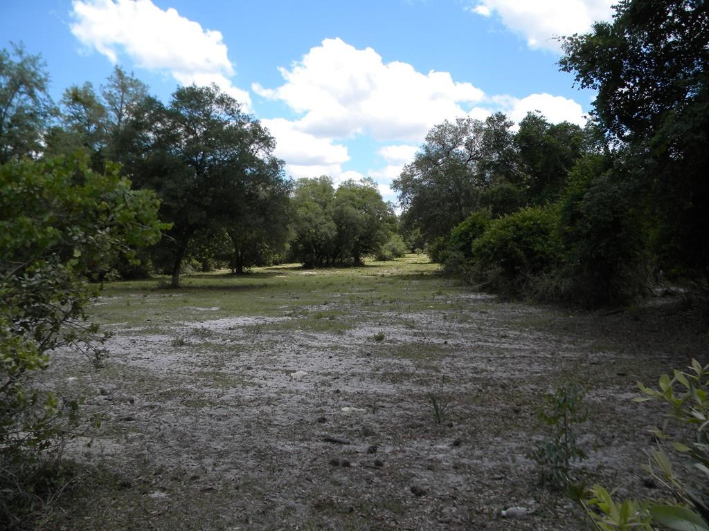 NORTH CENTRAL CHIEFLAND FLORIDA 9.92 ACRES NEAR GOLF COURSE