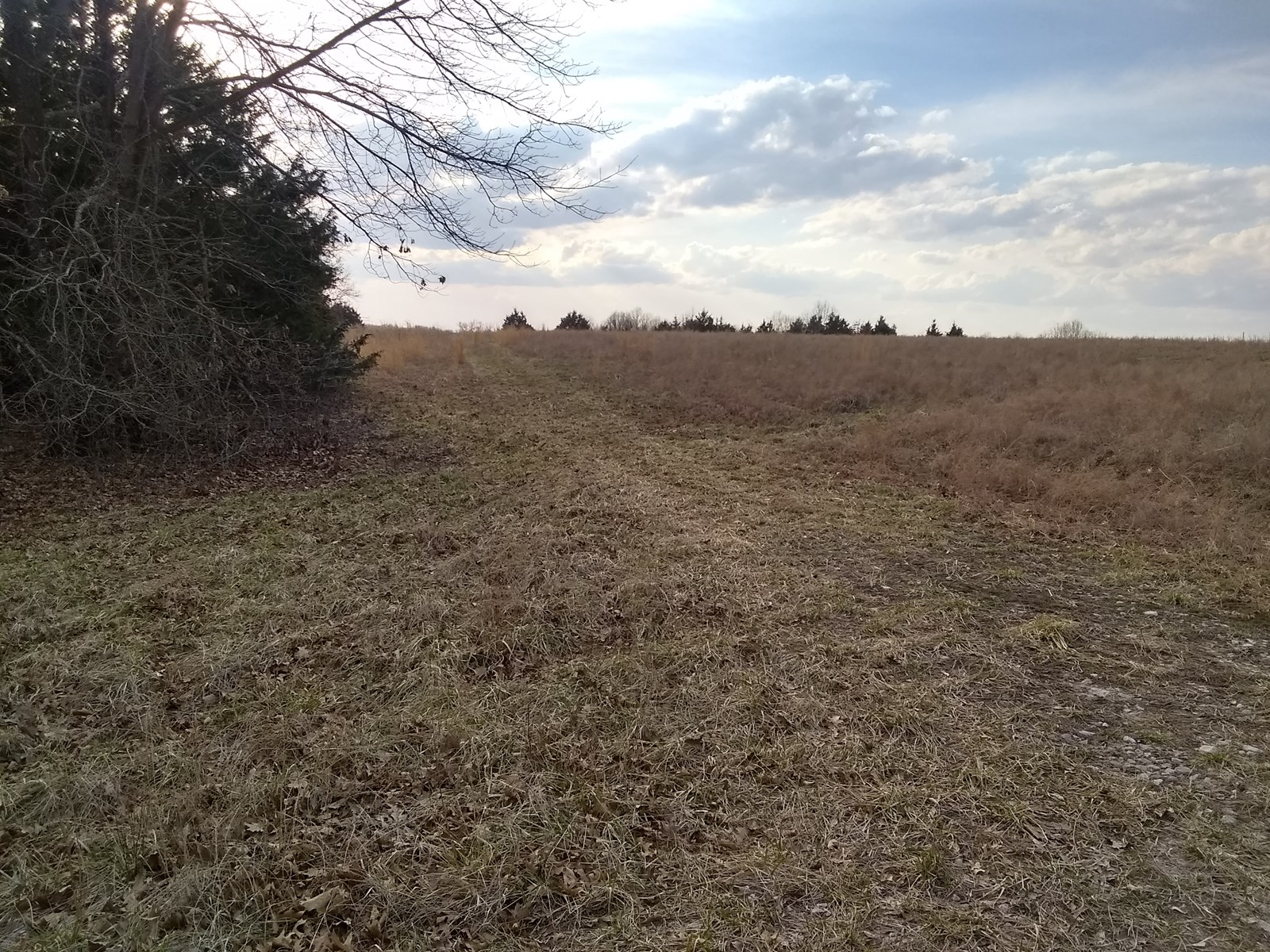 31 acres, hunting property or build your dream home