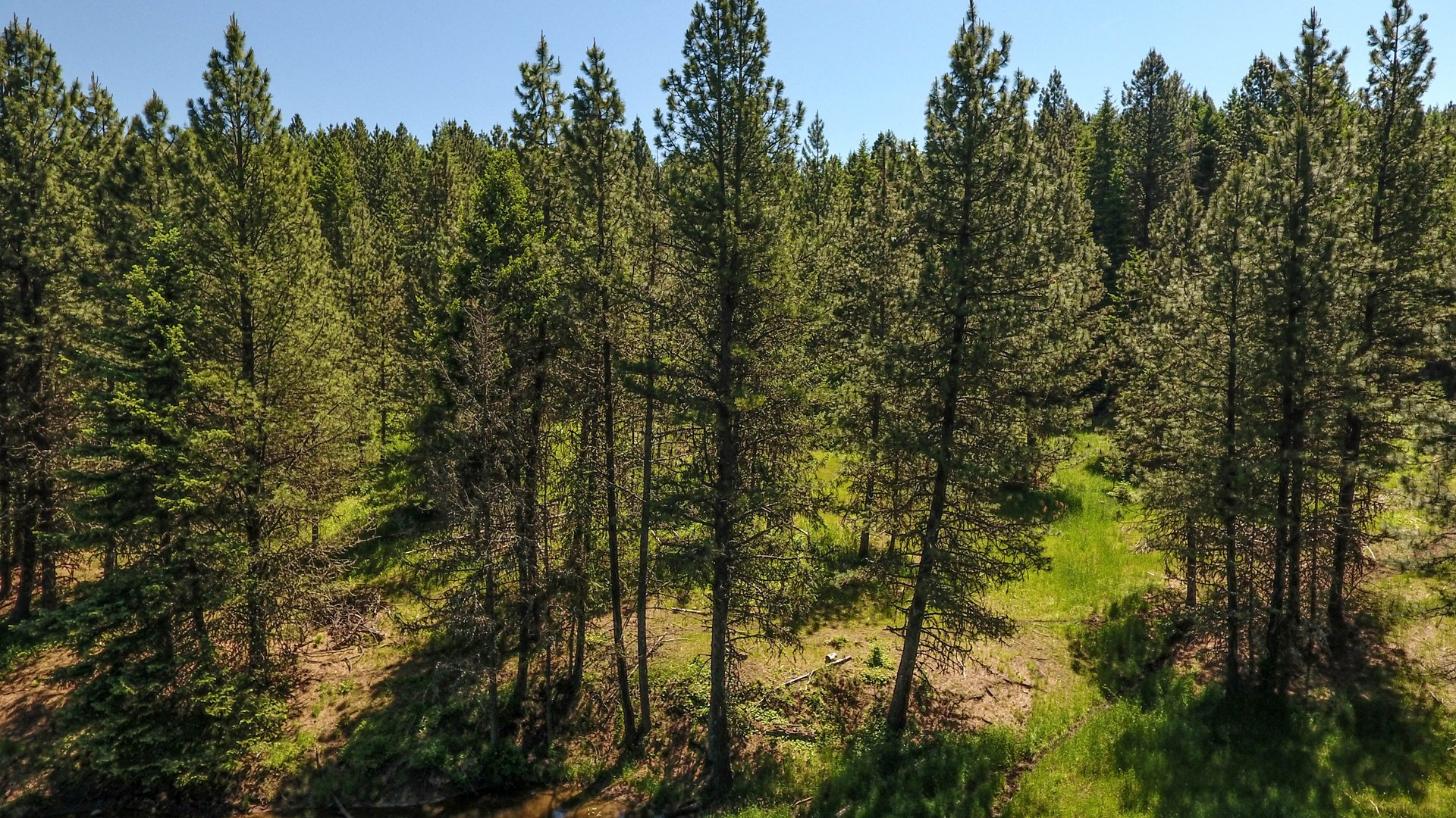 25 Acre bulding/Recreational Acrage For Sale Kamiah, Idaho