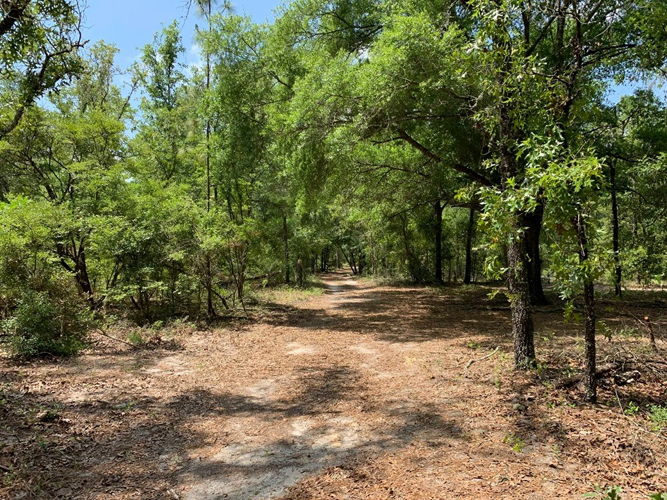 80 ACRES OF WOODED LAND IN GILCHRIST COUNTY - Bell, FL