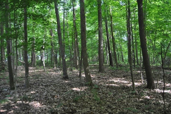 22 Acres of Hunting Ground, Marshall, IL