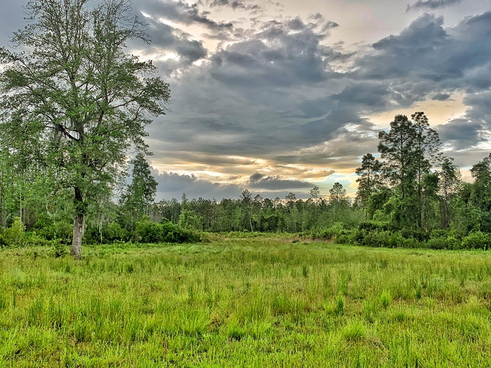 700+ Acres of HUNTING LAND - Madison County-Madison, Florida