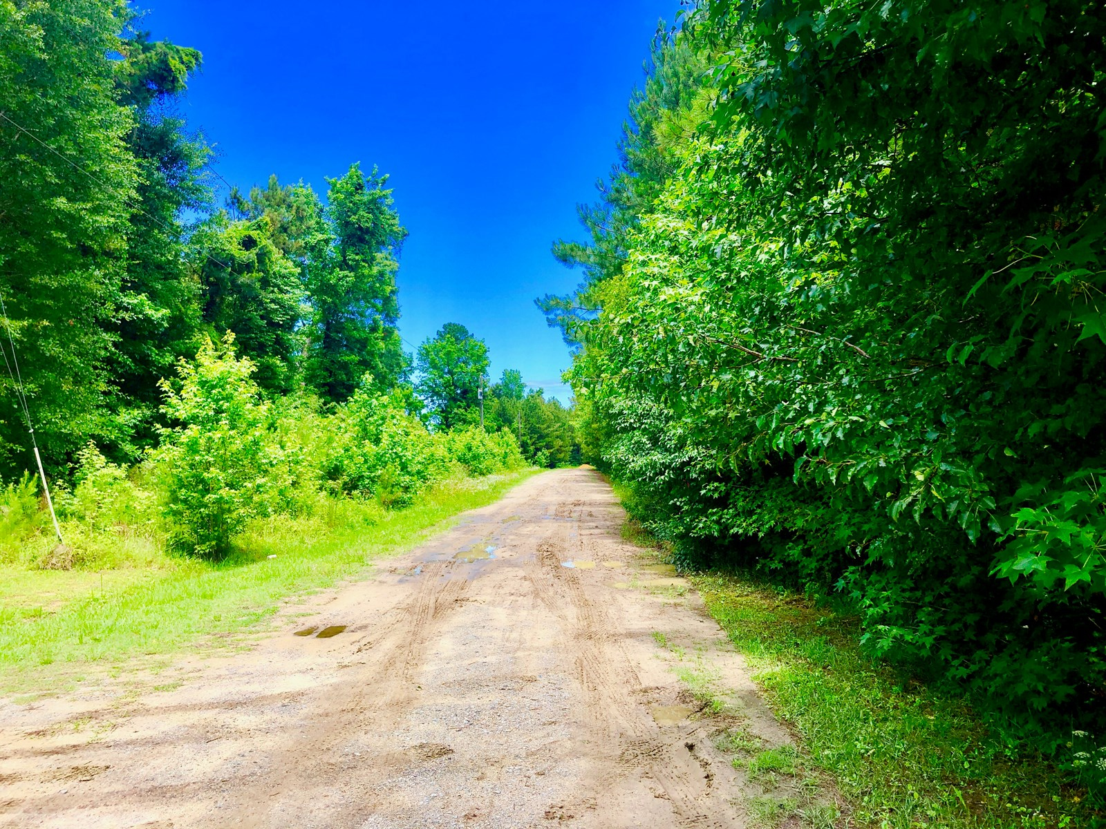 North Carolina Land For Sale, Martin County