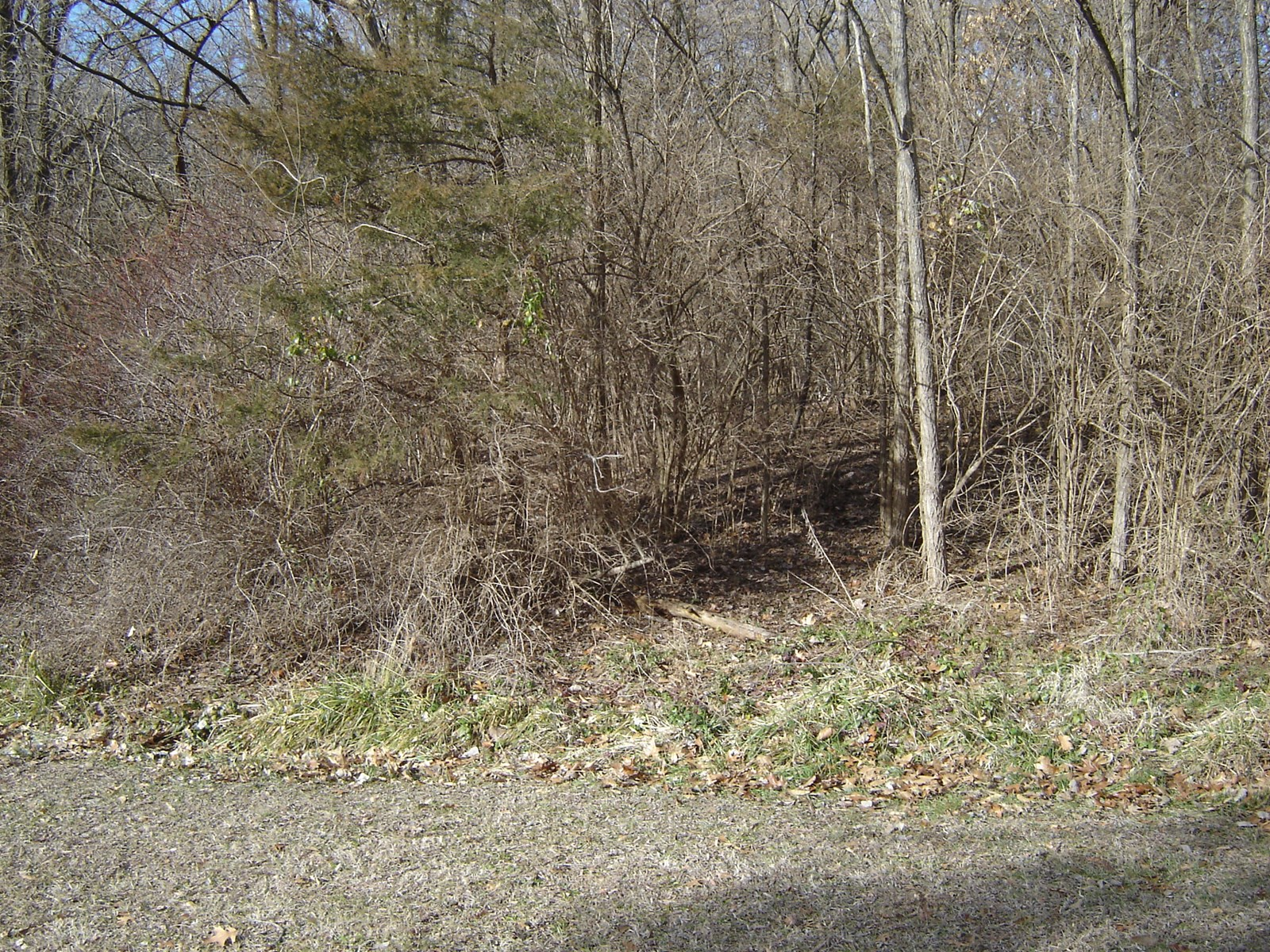 1+ acre wooded lot in secluded subdivision at edge of town