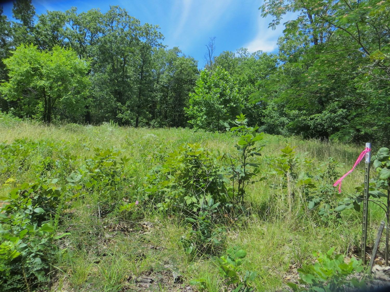 Search All Thayer Missouri Real Estate