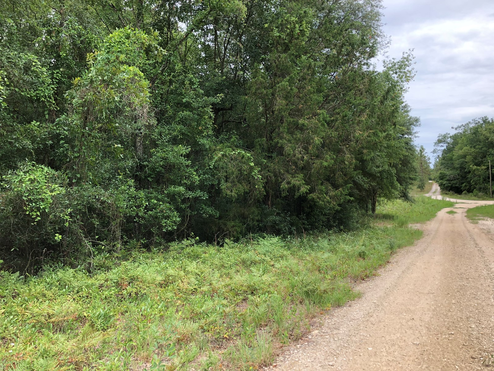 4 ACRE WOODED LOT FOR SALE IN O'BRIEN, FLORIDA