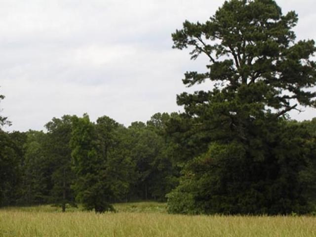 Wonderful 10 Acres in Pomona MO with great building sites!