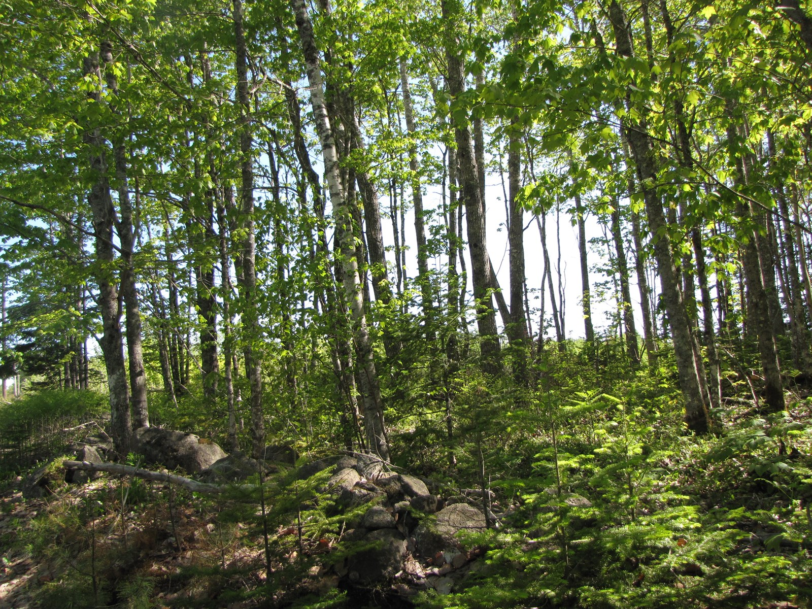 Wooded Lot For Sale in Northfield, Maine