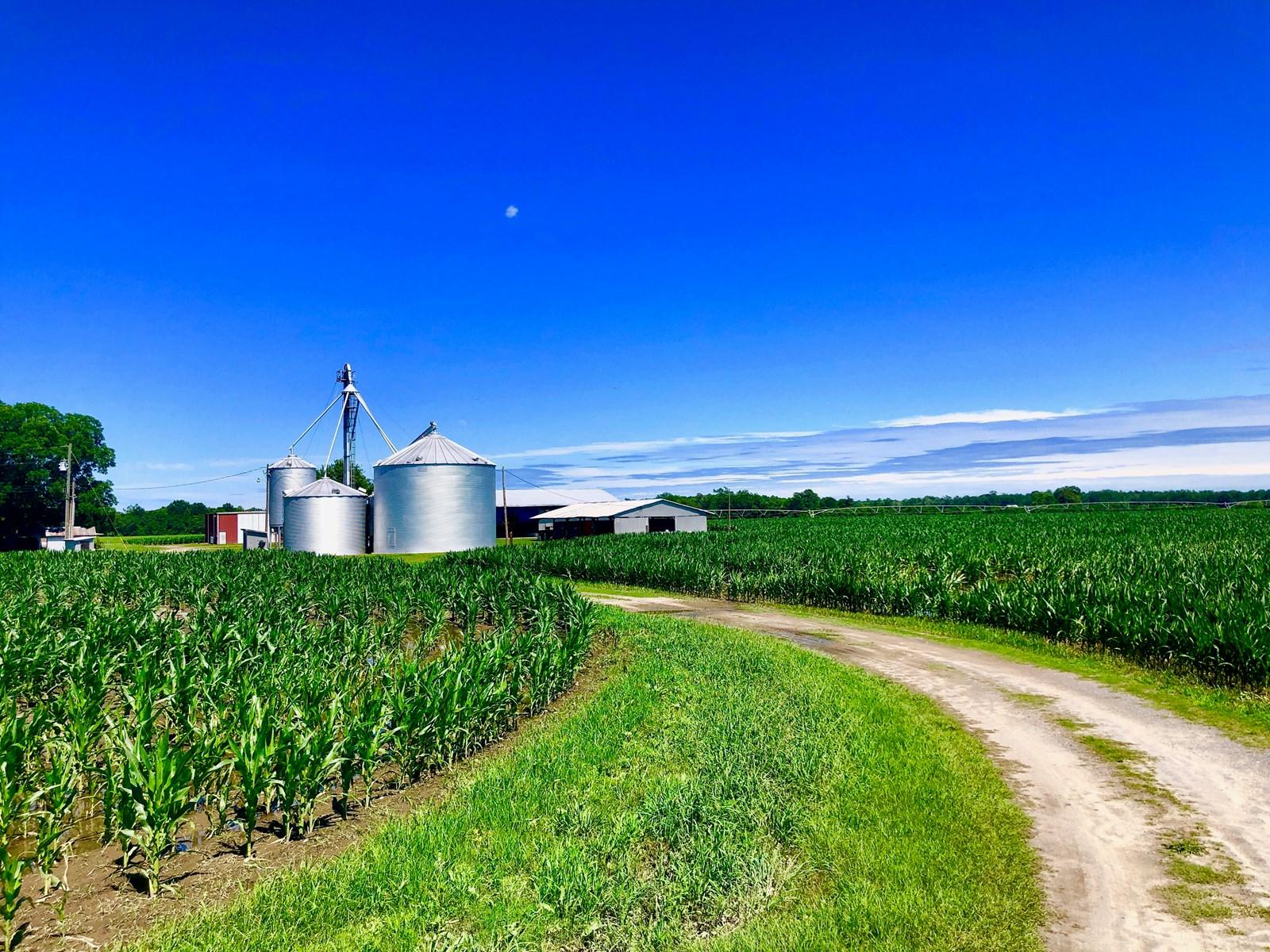 Farmland For Sale in Edgecombe County NC, Irrigated Farmland