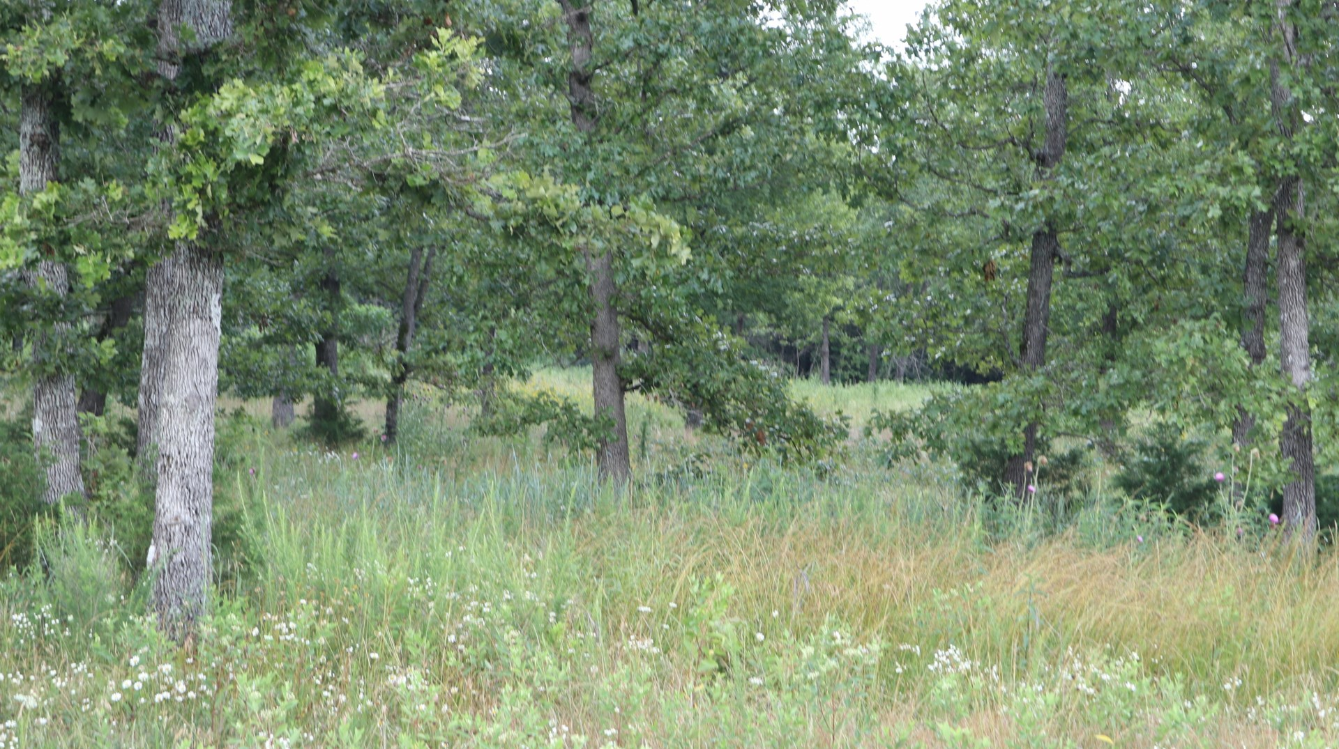Vacant Land for Sale in North Central Arkansas