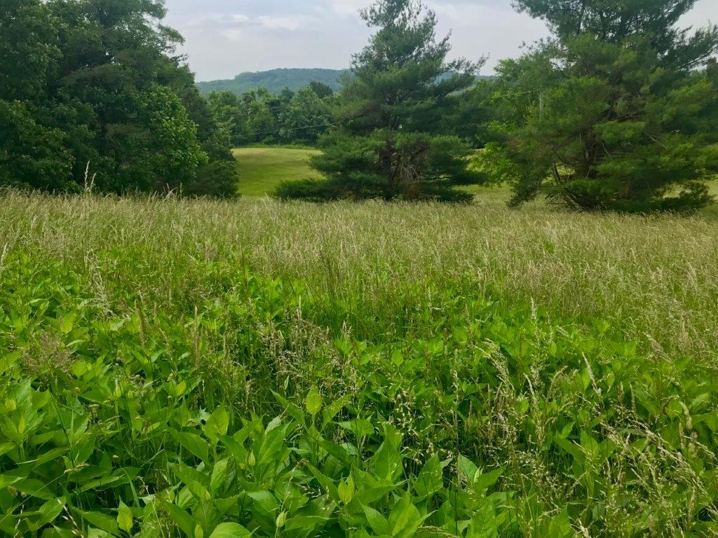 Lot for Sale off the Blue Ridge Parkway in Copper Hill VA