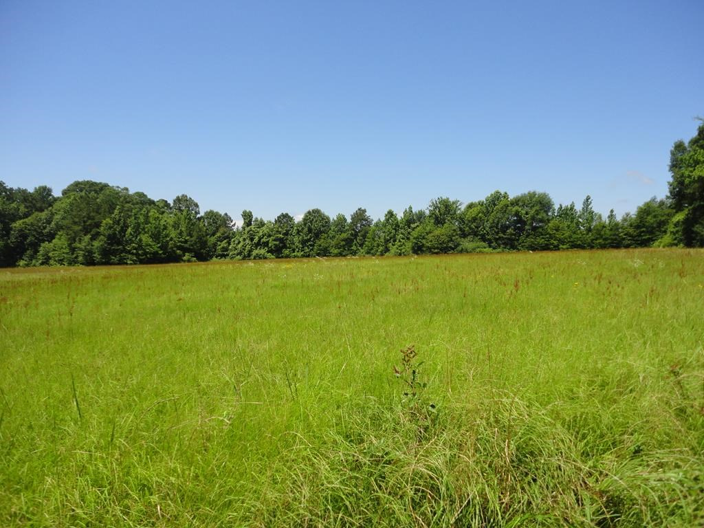 Land For Sale 8 Acres Brookhaven Lincoln County Mississippi