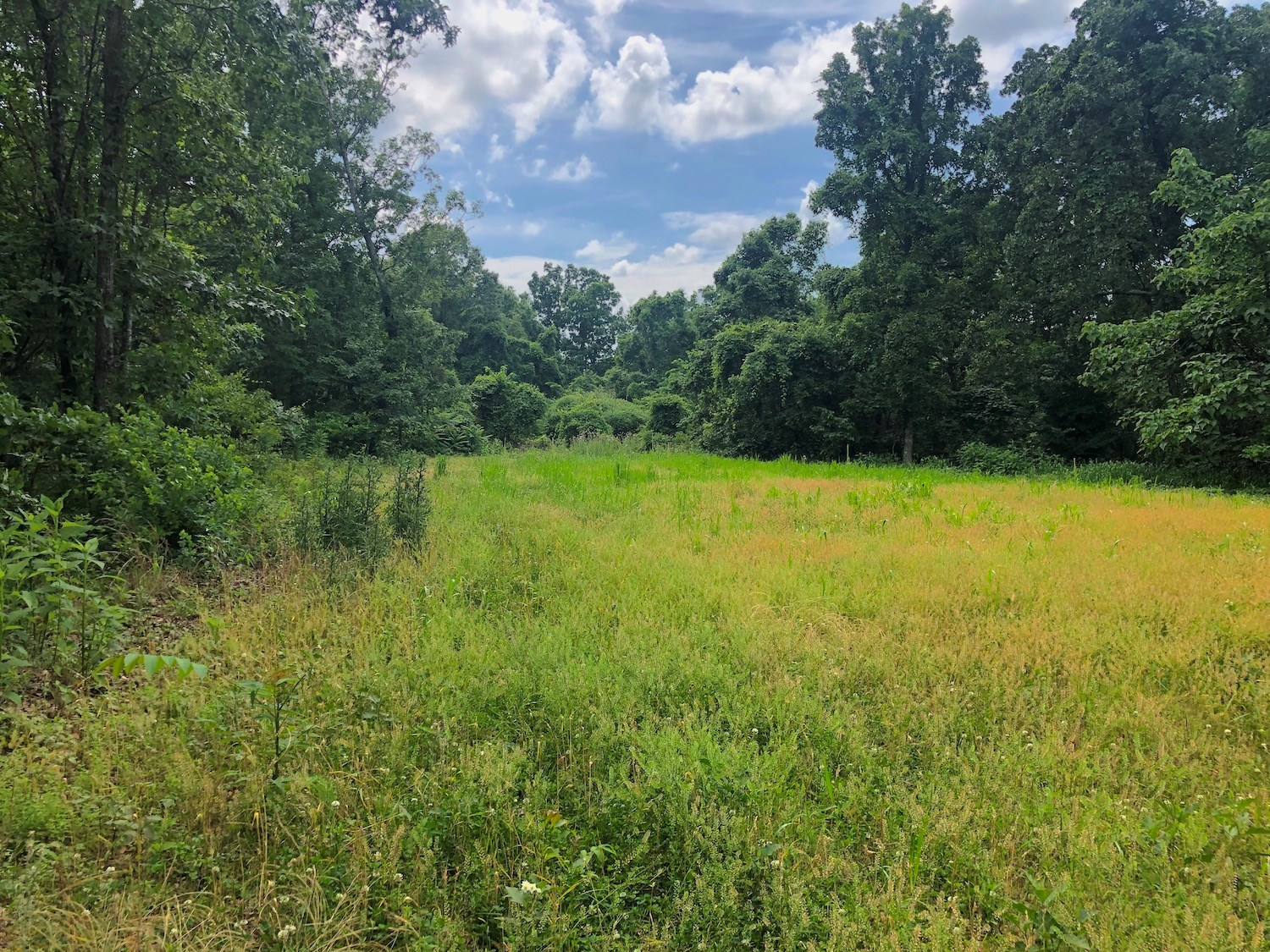 Hunting Land for Sale in Missouri Near Eleven Point River