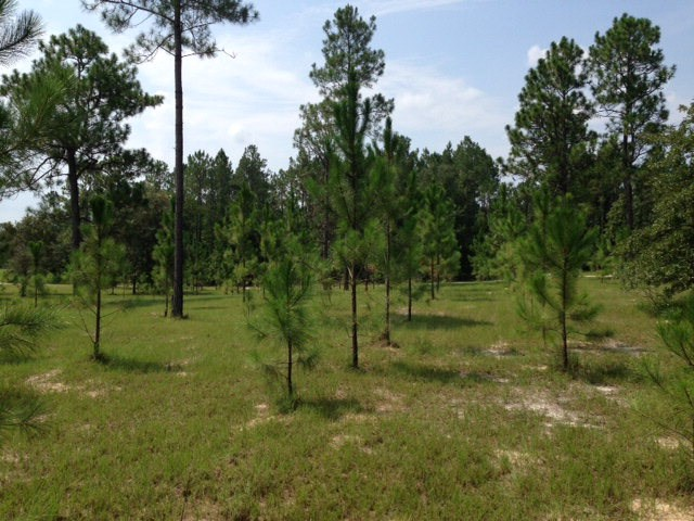 VACANT LAND FOR SALE -20 ACRES -  NORTH GILCHRIST COUNTY