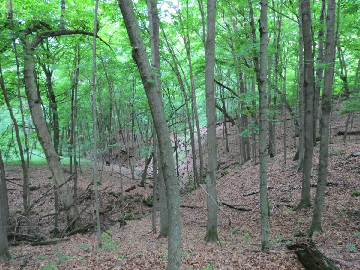 Amazing Deer Hunting Property Buffalo County, WI