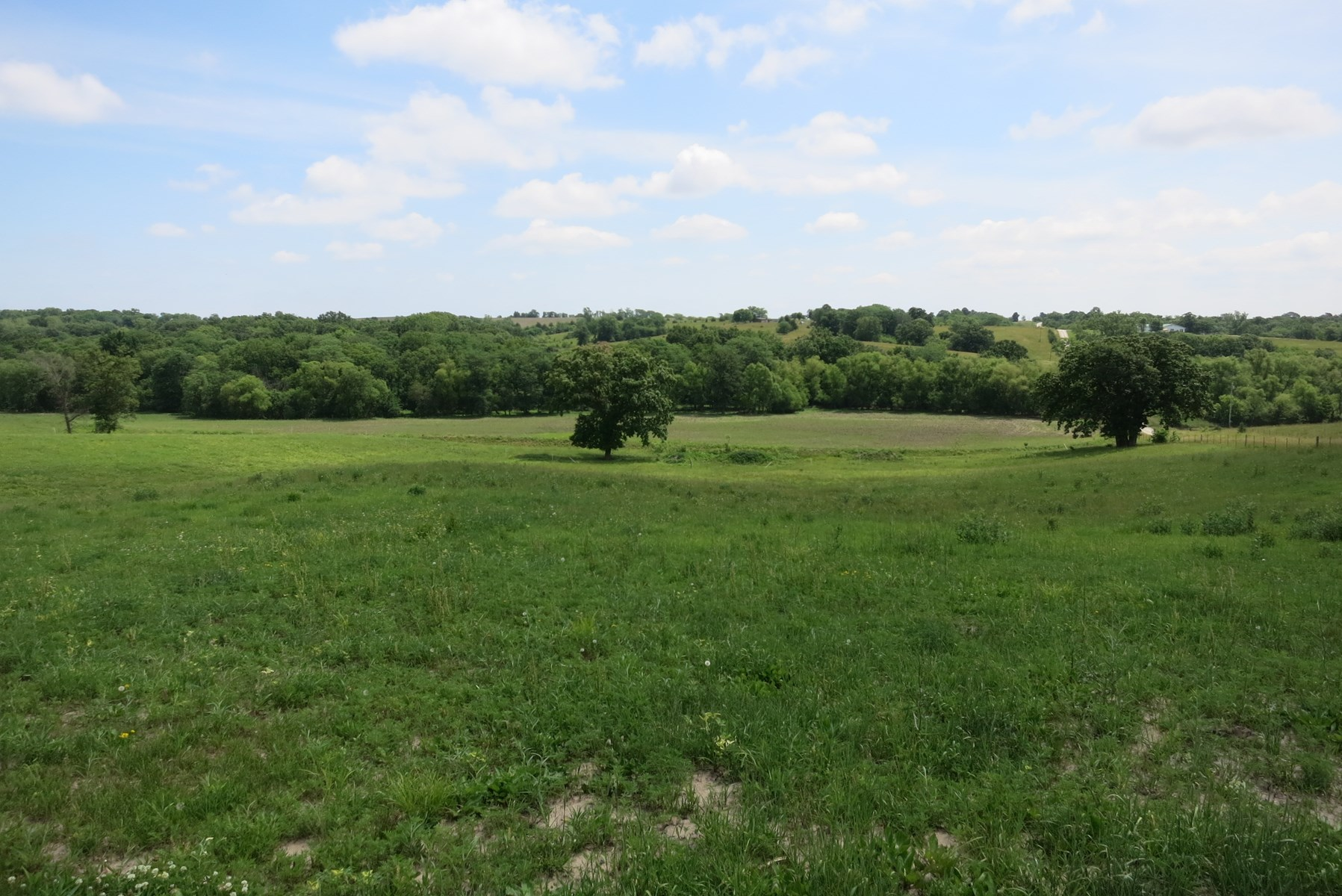For Sale 80 Acre Tract in NW Missouri