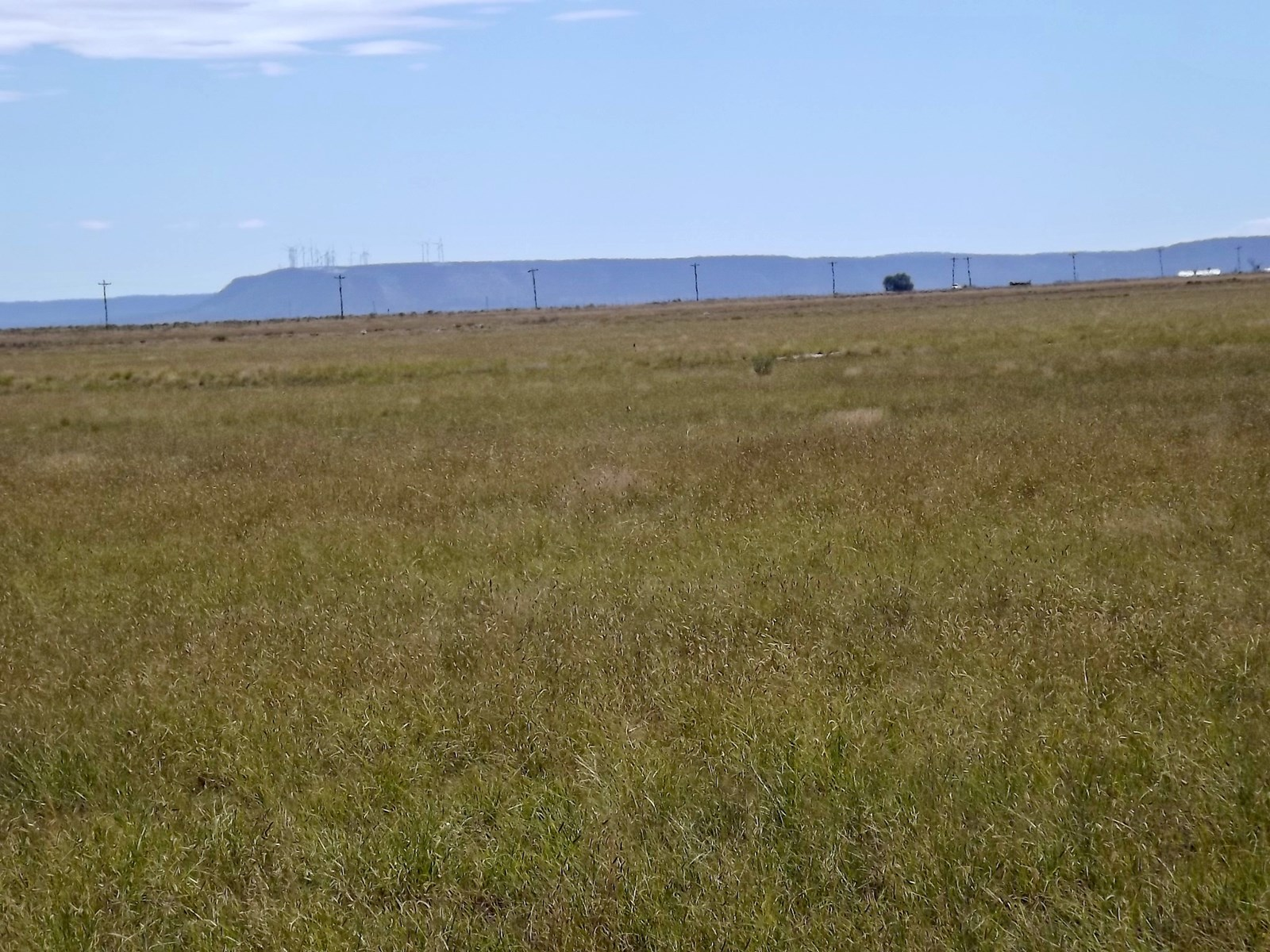 NM 904 Ac Grassland For Sale Estancia New Mexico