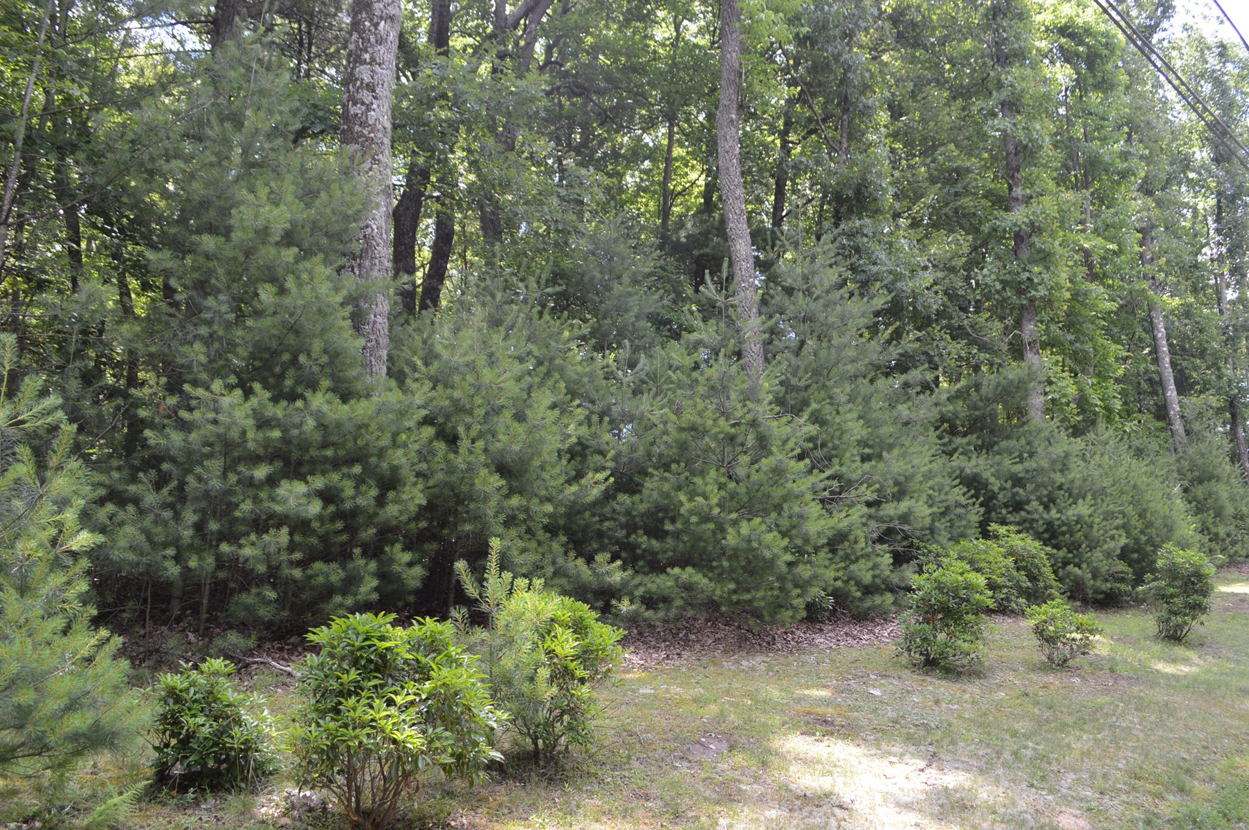 Building Lot for Sale in High Meadows Roaring Gap NC