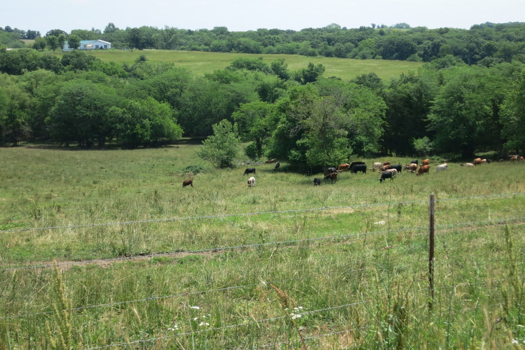 For Sale 40 Acre Tract in Northwest Missouri