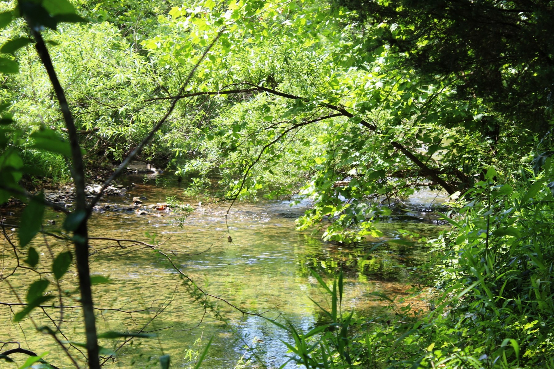 Creek front property Mammoth Spring, Ar for sale