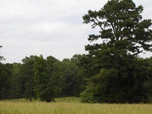 IDEAL LOCATION - LAND FOR SALE IN WEST PLAINS CITY LIMITS