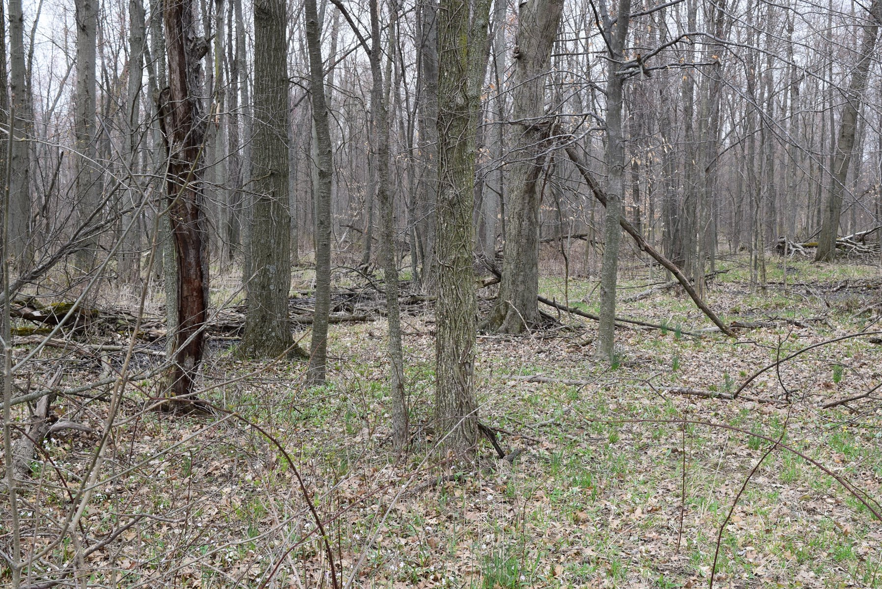 Land for sale 32.2 Acres +/-