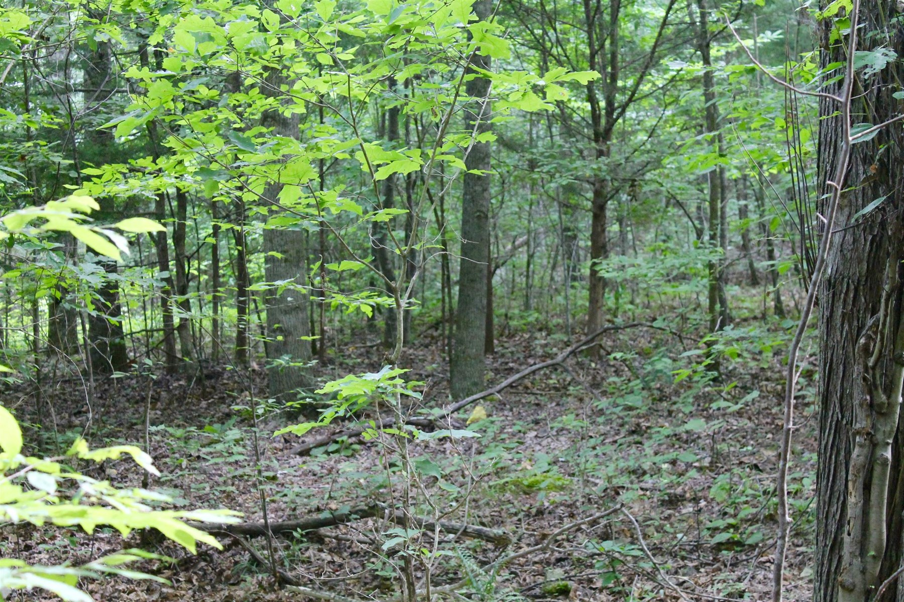 Hunter's Paradise on 119.79 Acres in Perry County Tennessee