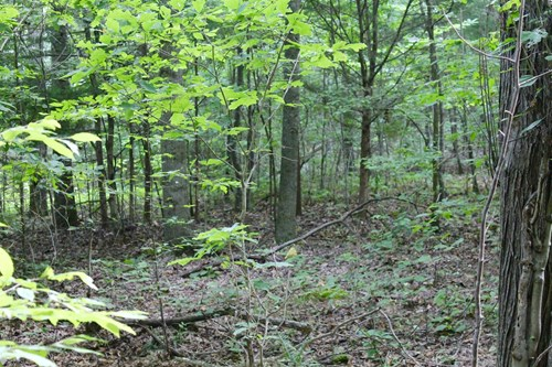 Land for Sale with Acre in Perry County Tennessee
