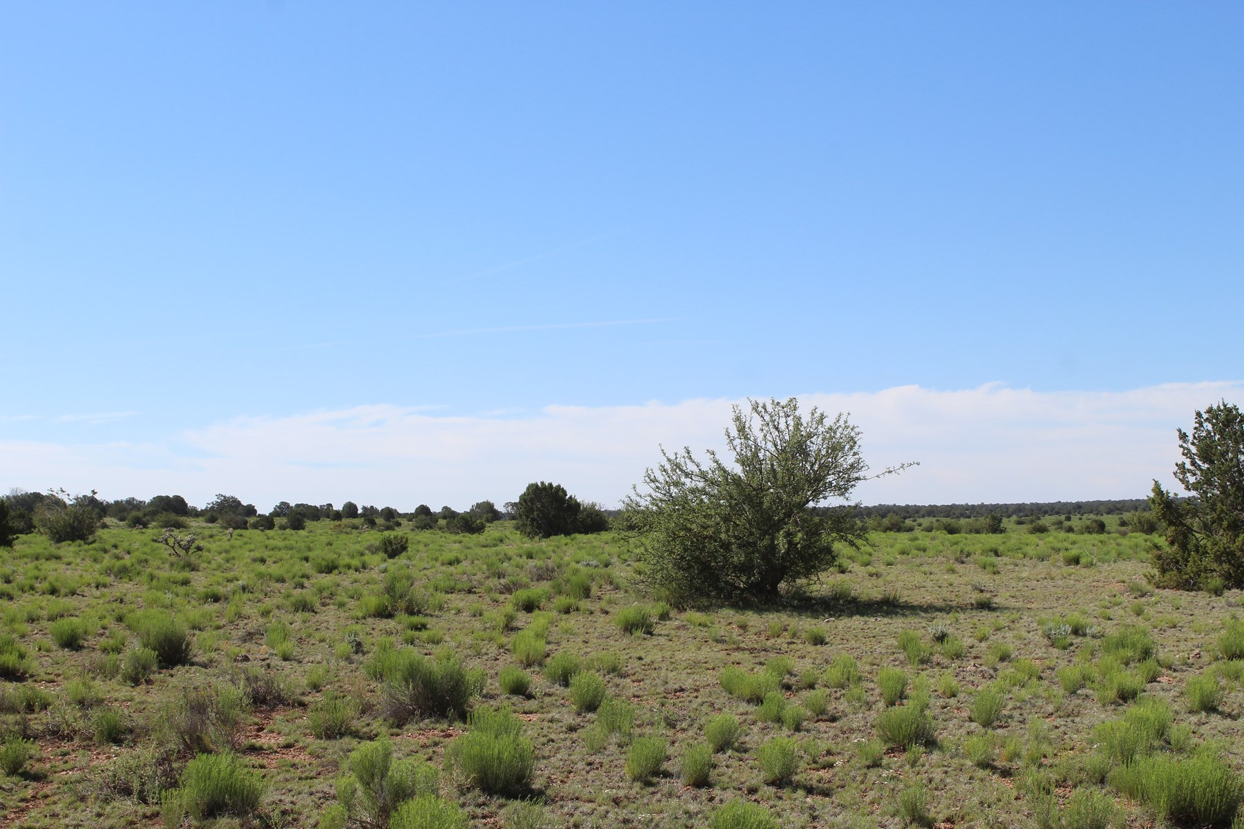 40 acres of Mountain Land in Northern Arizona for sale