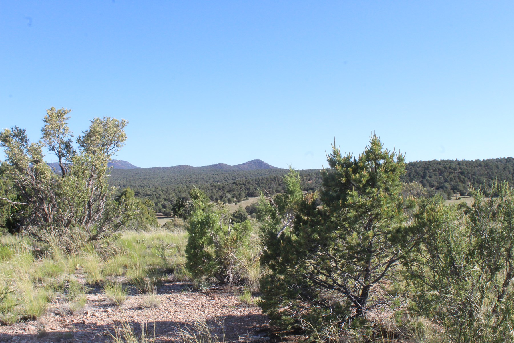 Land that borders Public Land for sale in Seligman AZ