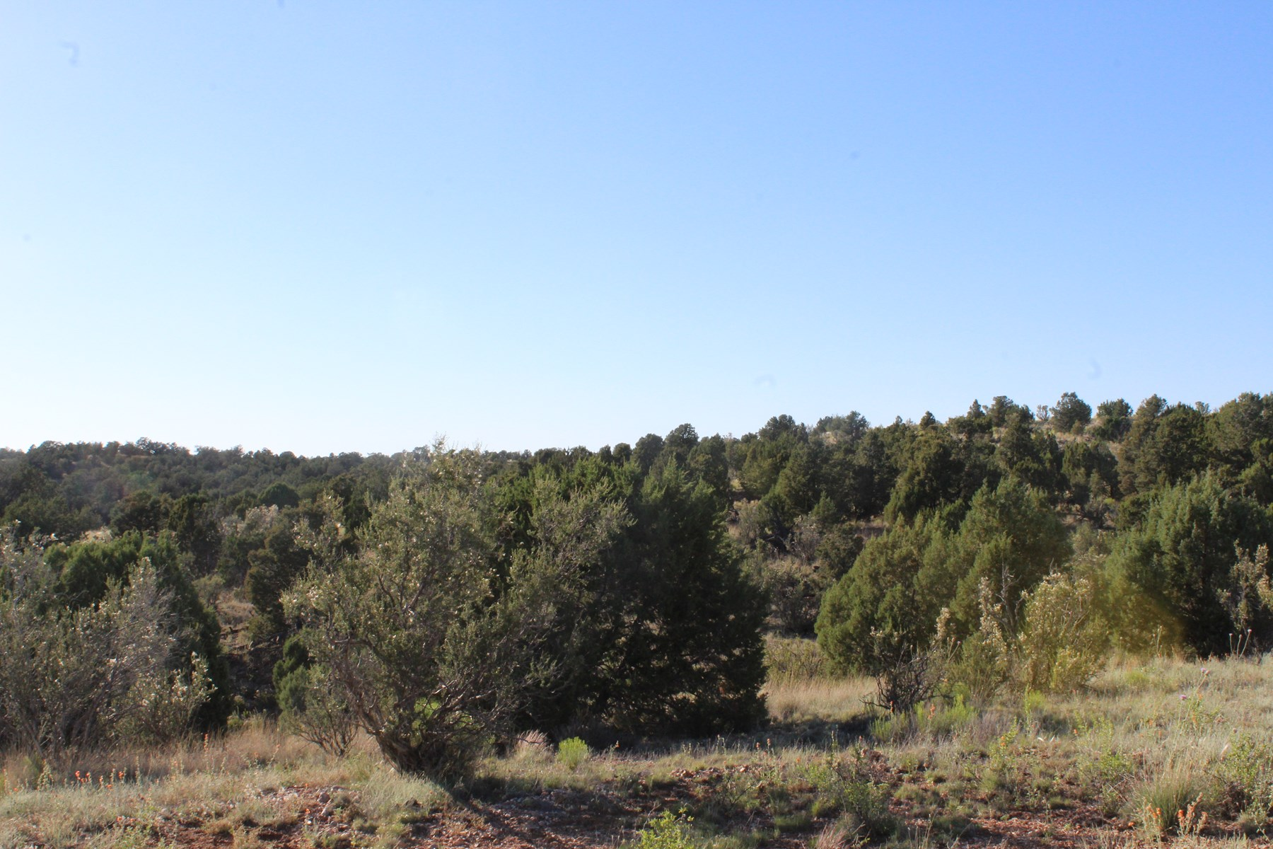 Recreational Land bordering Public Land in Seligman AZ