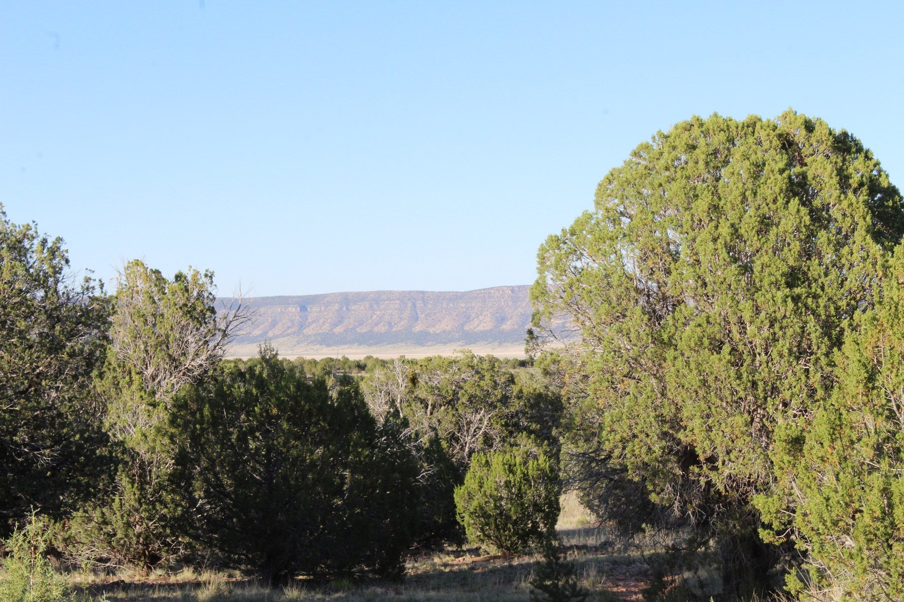 Land in Northern Arizona Affordable Price 5.24 Acres