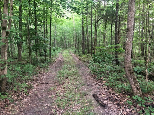 Land For Sale in Williamson County!