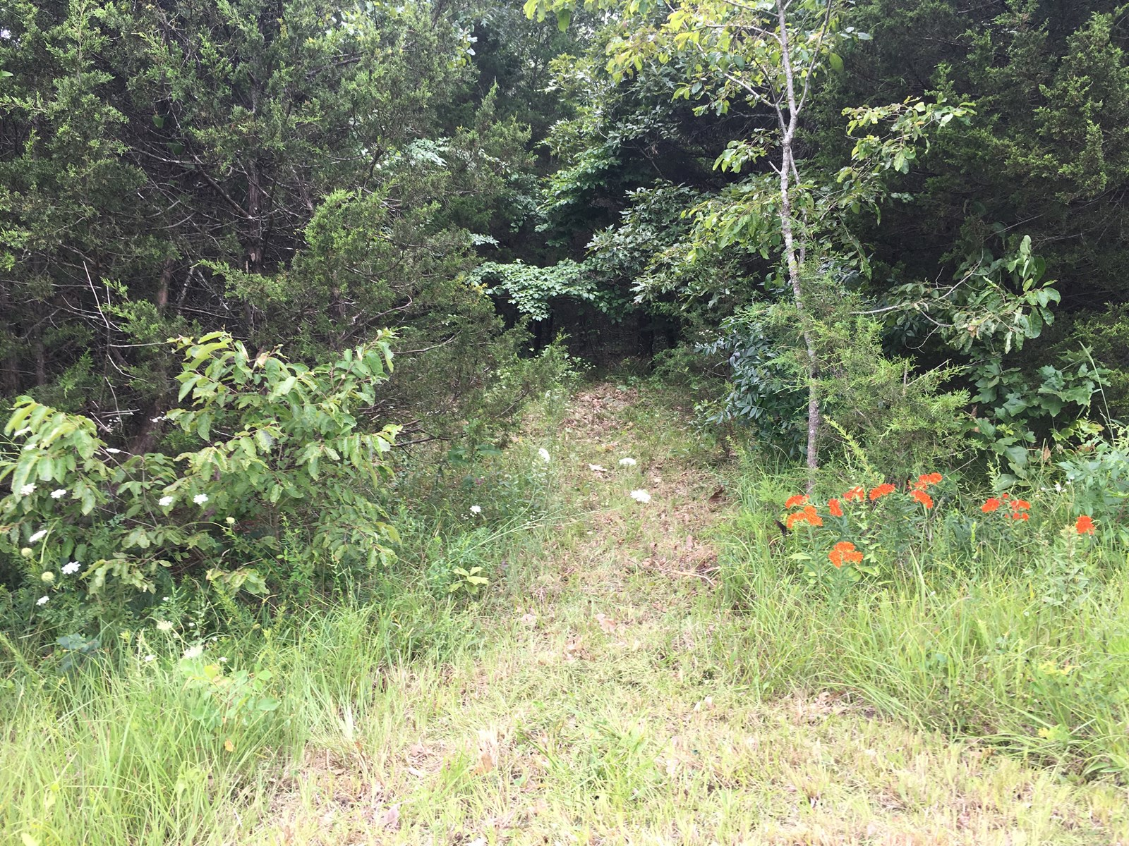 Pocahontas Arkansas Real Estate - AR Homes, Farms and