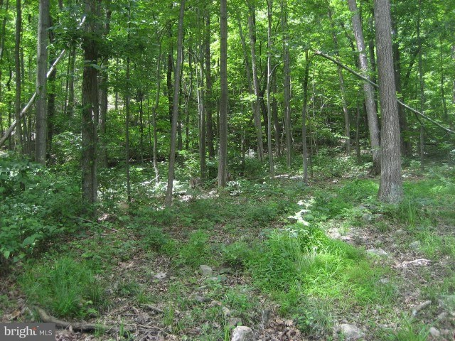 Land For Sale - Bloomery, WV