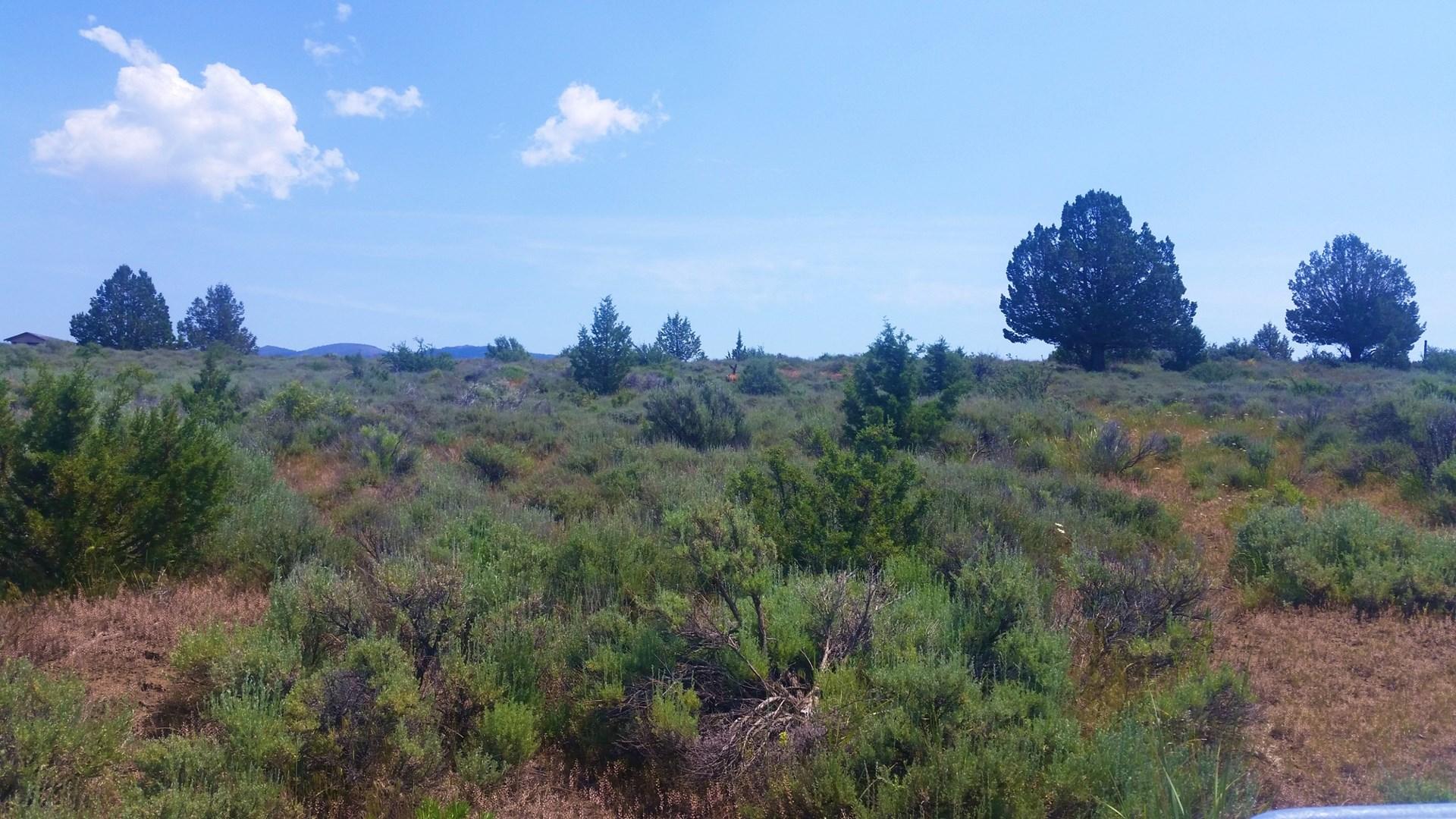 Waterfront property: 163+/- Acres/Springs/Lassen Creek