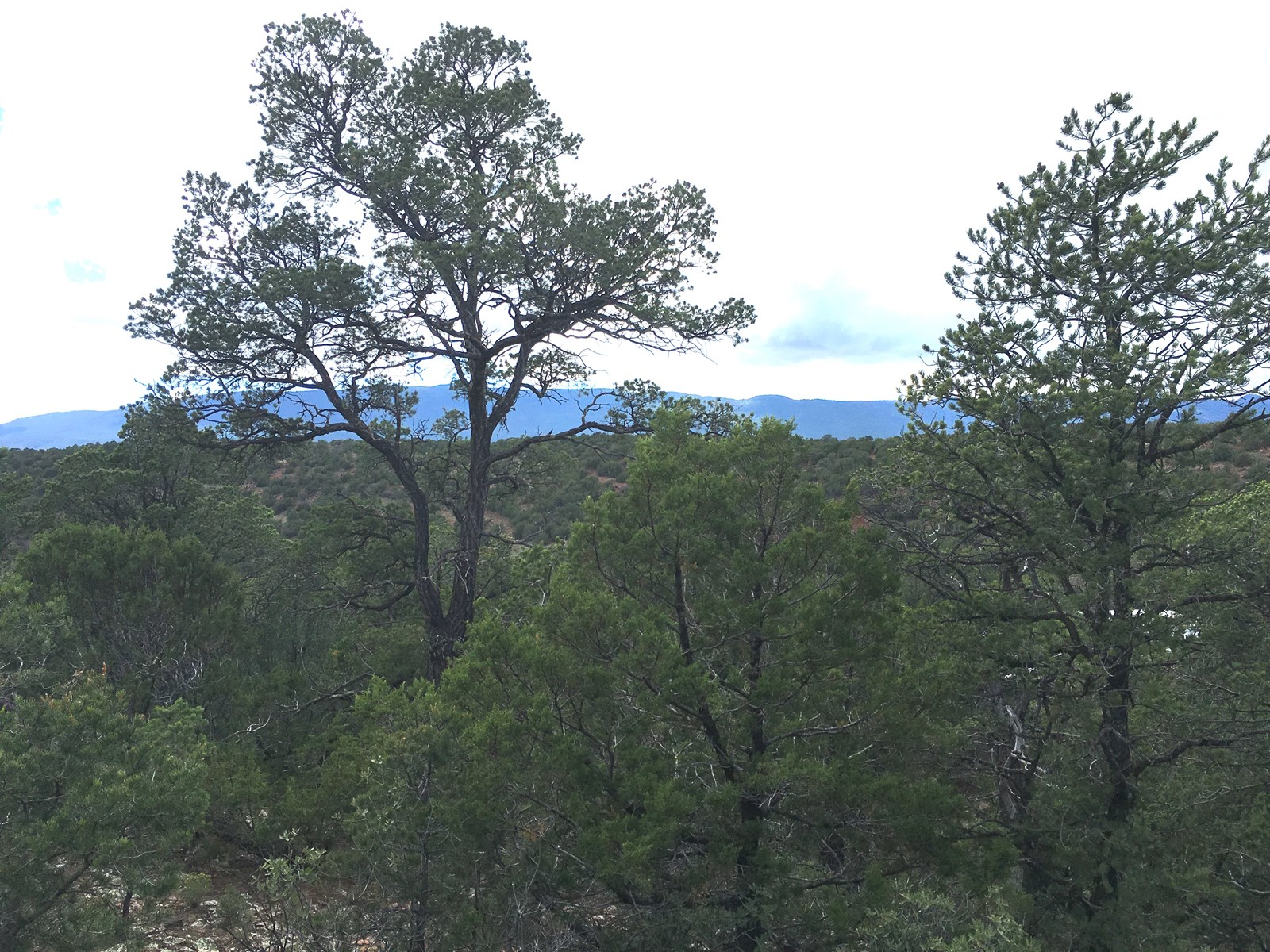 Land For Sale in Tijeras Canyon NM in Bernalillo County