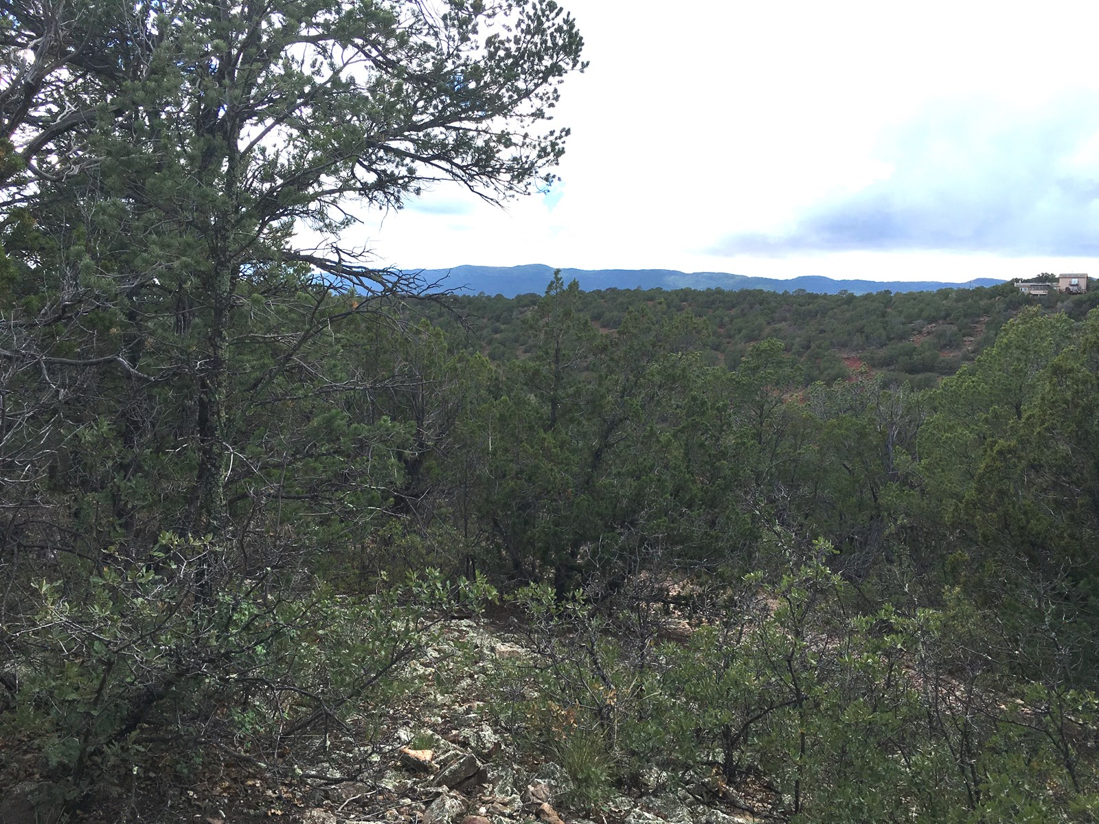 Wooded Lot For Sale in Tijeras Canyon Bernalillo County NM