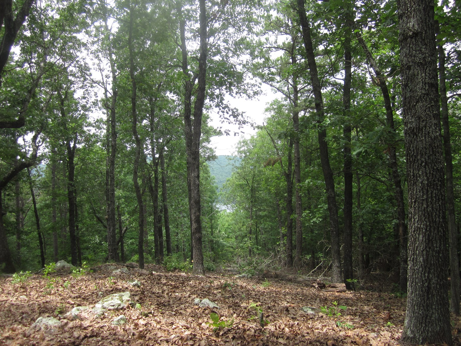 WOODED LAND WITH VIEW OF LAKE BULL SHOALS!