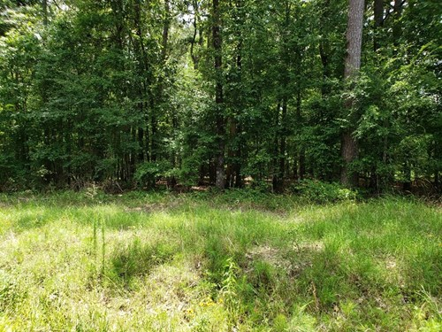 Louisiana recreation and Realtree hunting land for sale