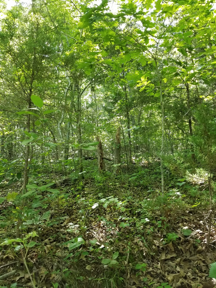 LAND FOR SALE WITH NICE BUILDING SITE IN FLIPPIN AR