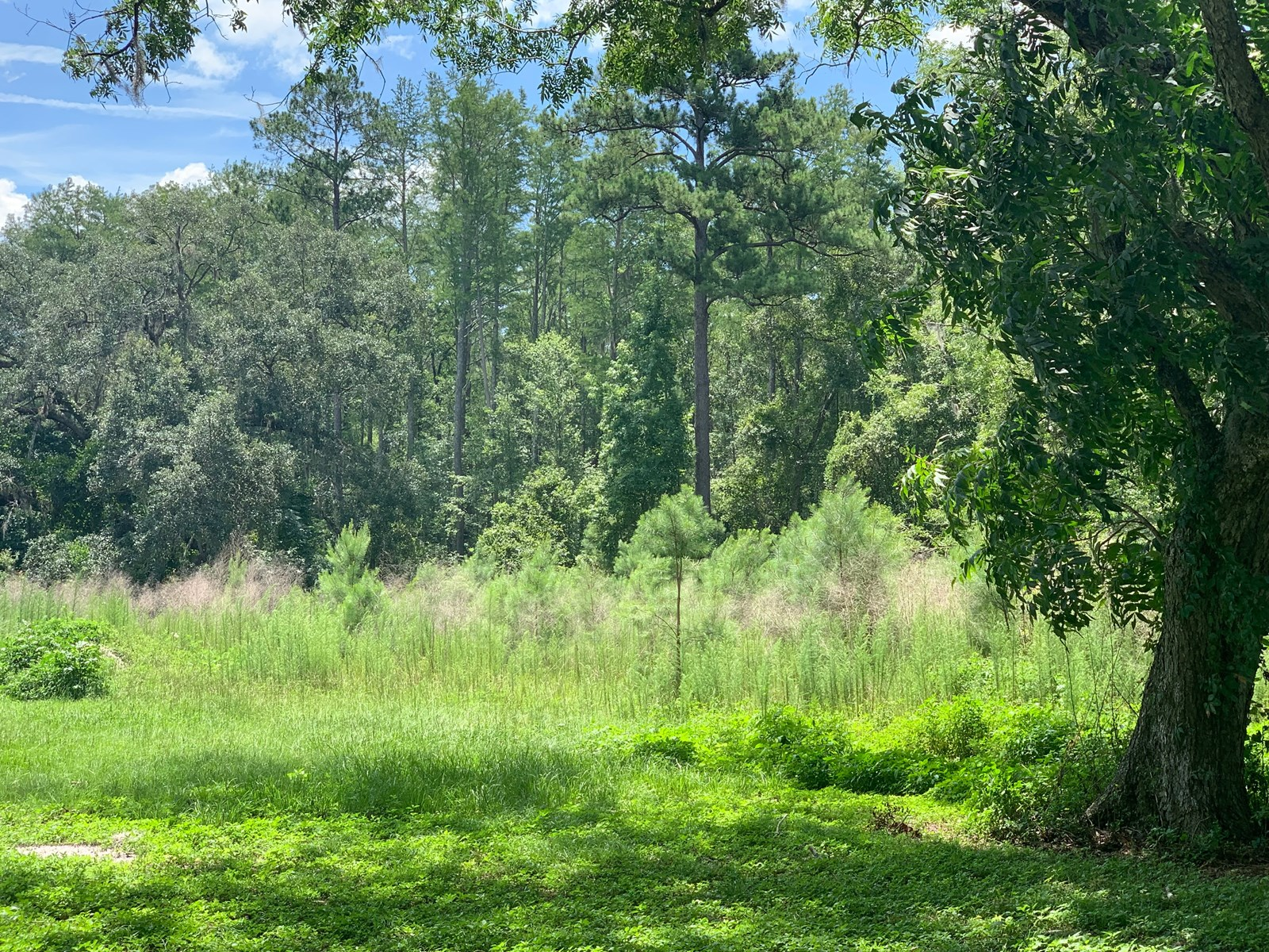 WOODED LOT ON 4 ACRES IN LAKE CITY, FLORIDA