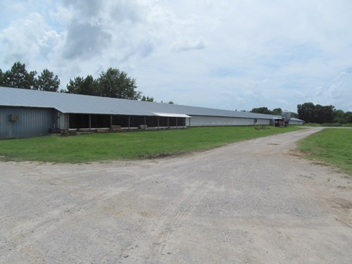 POULTRY FARM  - EAST TEXAS - GILMER - BRICK HOME - 82 ACRES