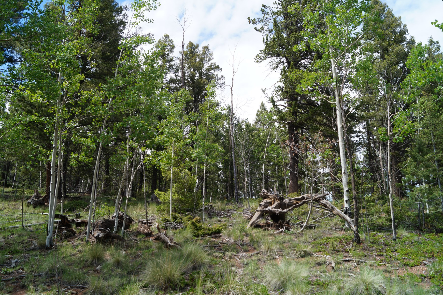 2 Acres of Vacant Land in Rainbow Valley, Divide, CO